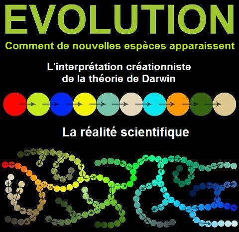 Evolutiondesespeces